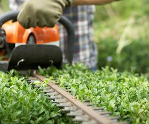 Heggen snoeien de service van fika hoveniers for Garden maintenance van