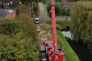 Bomen snoeien Zoetermeer